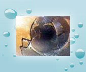 damaged sewer pipe video inspection